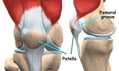 Fungsi tempurung lutut